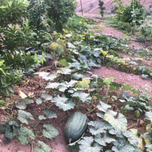 TIGMI NOMADE's garden