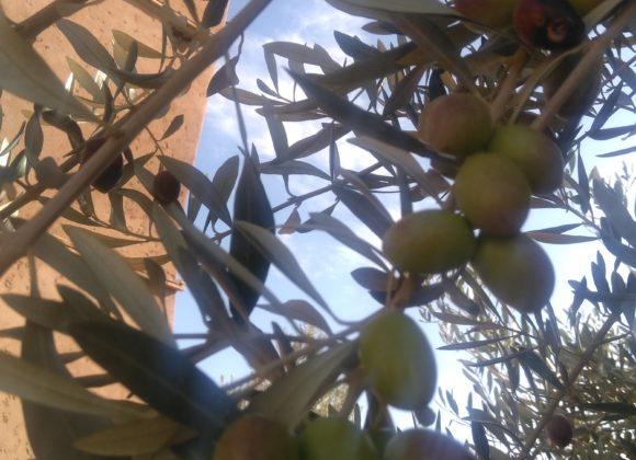 NOUVELLE récolte à tIgmi nomade
