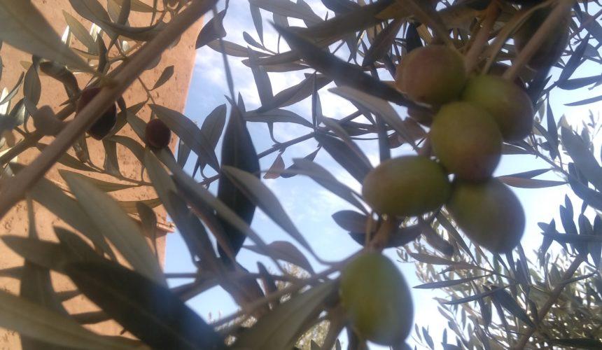 New harvest at TIGMI NOMADE